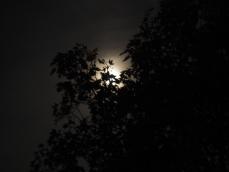 Diesiger Mond am 24.09.15