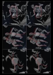 Sternbild Memory 13-15