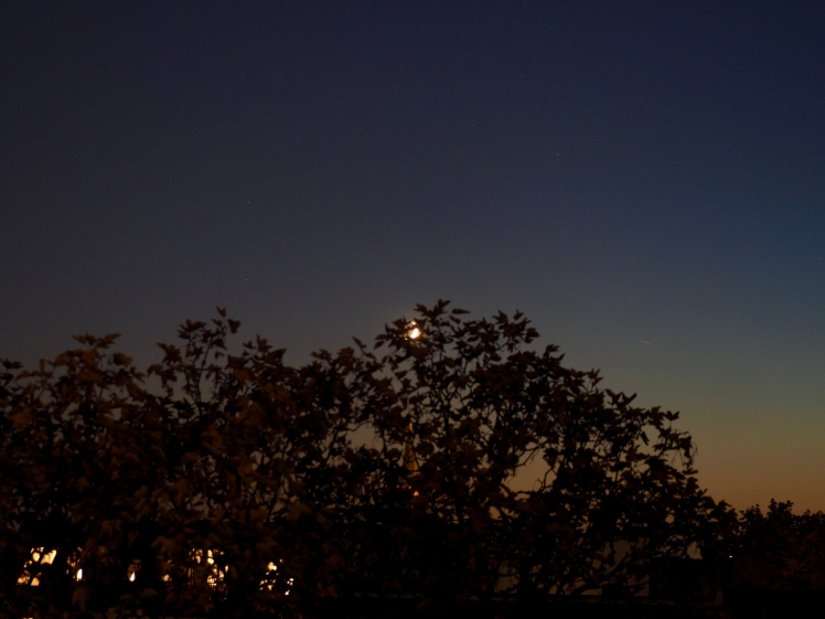 Mondsichel verschwindet hinter Baum